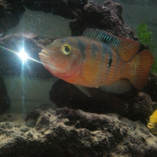 Browse Fish By Popular Tags Whats That Fish