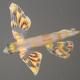 Atlantic Flyingfish (Juvenile)