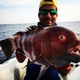 Giant hogfish