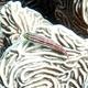 Striped Triplefin