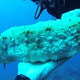 Furry Sea Cucumber