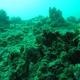 Spotless Cardinalfish