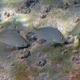 Arabian Pinfish