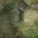 Bucktooth Parrotfish (Juvenile)