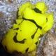 Minor Nudibranch