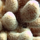 Cylinder Coral