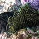 Beautiful Feather Star