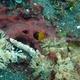Miles Mantis Shrimp