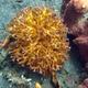 Birds Nest Coral