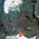 Zephyra Nudibranch