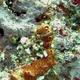 Coral-eating Sponge