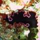 Glorious Flatworm