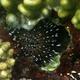 Needle-spines Sea Urchin