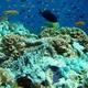 Greenish Blue Sponge