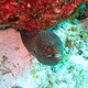 Whitemouth Moray