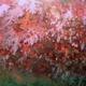 Flower Tree Coral