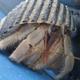 Ruggie Land Hermit Crab
