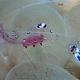 Sarasvati Anemone Shrimp