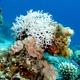 White Tangled Bryozoan