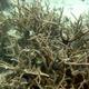 Australia corals etc to be identified