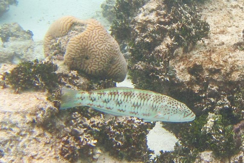 Cook Islands Resorts All Inclusive Overwater