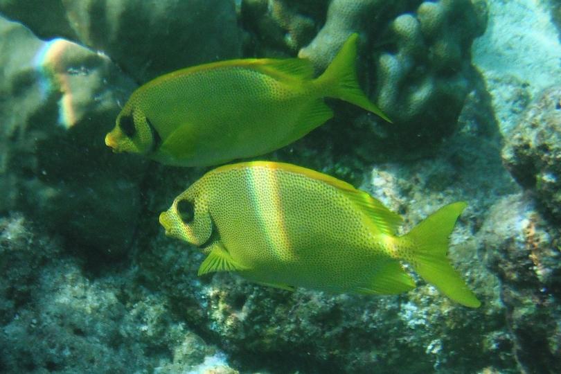 Filitheyo Island Resort Maldives Reviews